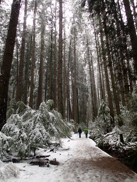 Pacific Spirit Park in the snow. You can get to this Vancouver hike on transit
