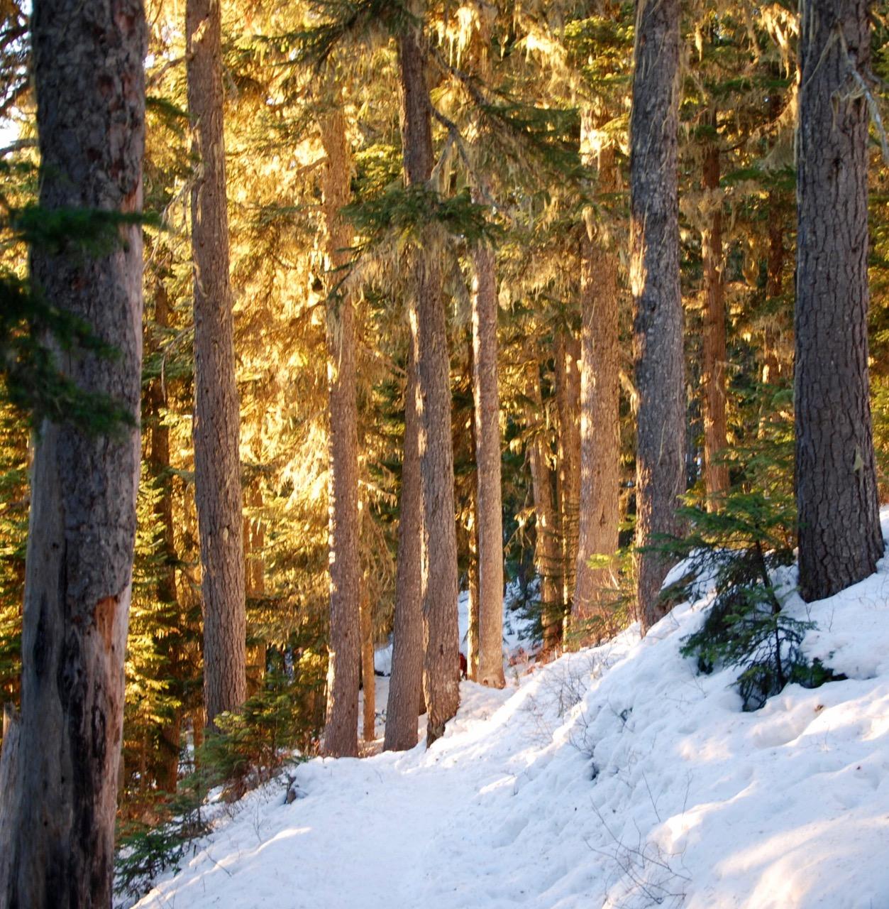 Golden hour on the Garibaldi Lake Trail