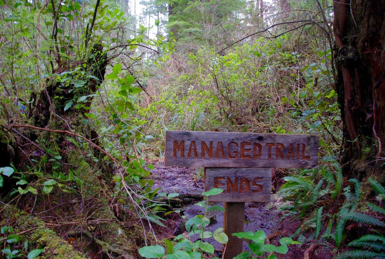 Big Tree Trail, Meares Island, Tofino BC