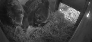 Vancouver Wildlife viewing - bear cam