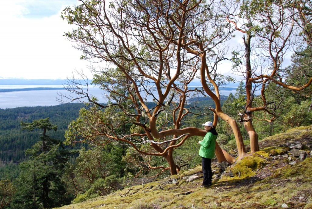 A woman stands next to an arbutus tree on Manzanita Bluff on the Sunshine Coast Trail
