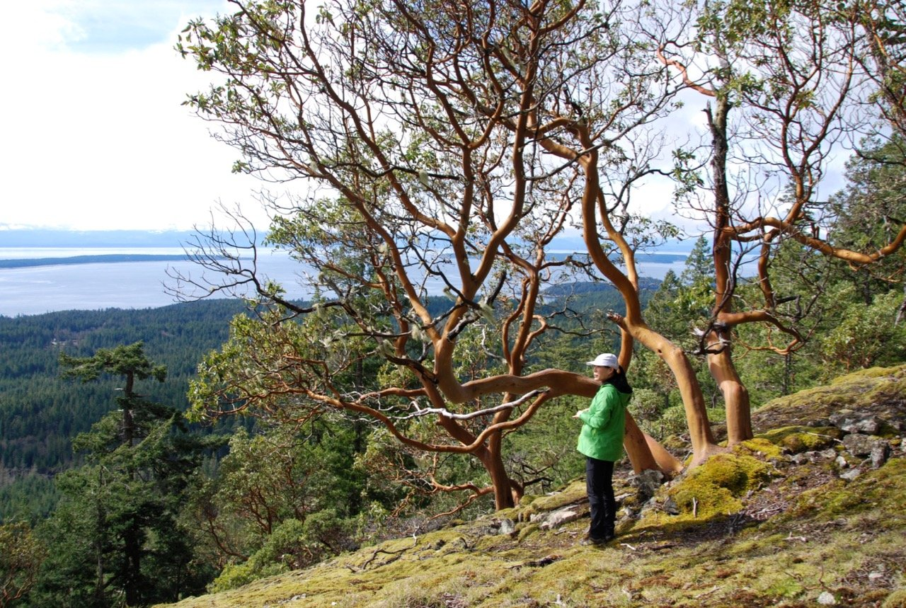 A woman stands next to an arbutus tree on Manzanita Bluff on the Sunshine Coast Trail