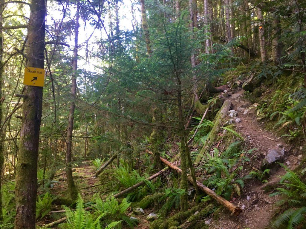 Sigurd Creek Trail - Crooked Falls