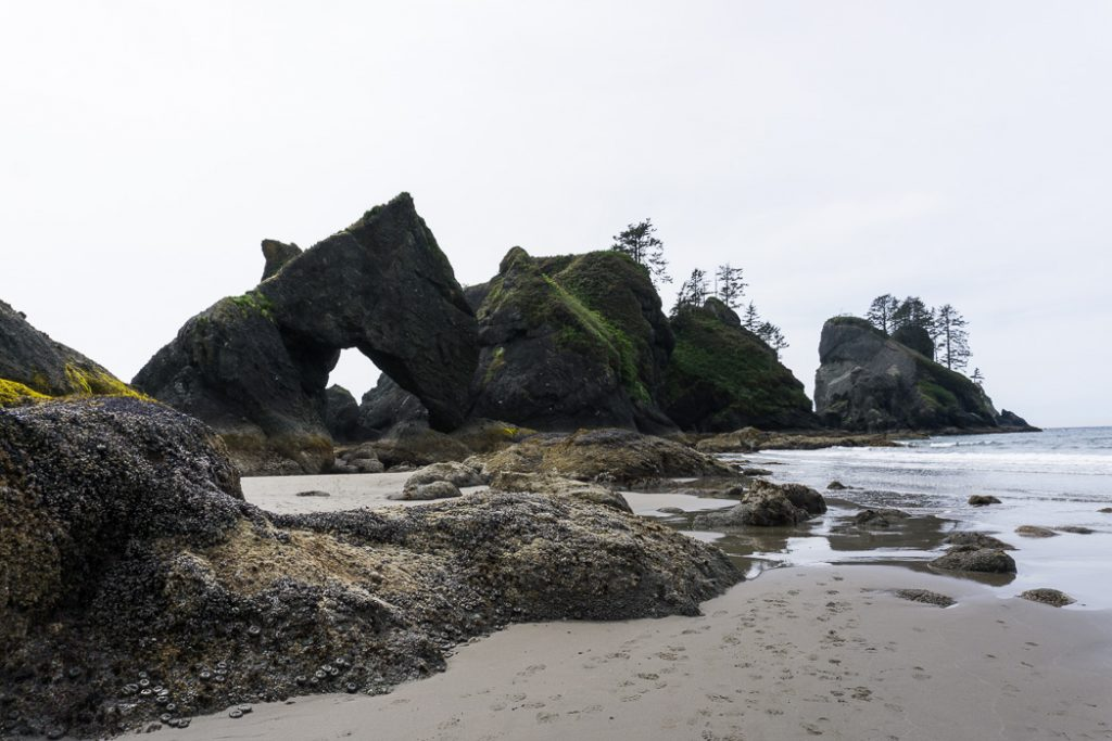 Sea stacks at Point of the Arches at Shi Shi Beach at low tide. A complete guide to hiking and camping at Shi Shi Beach.