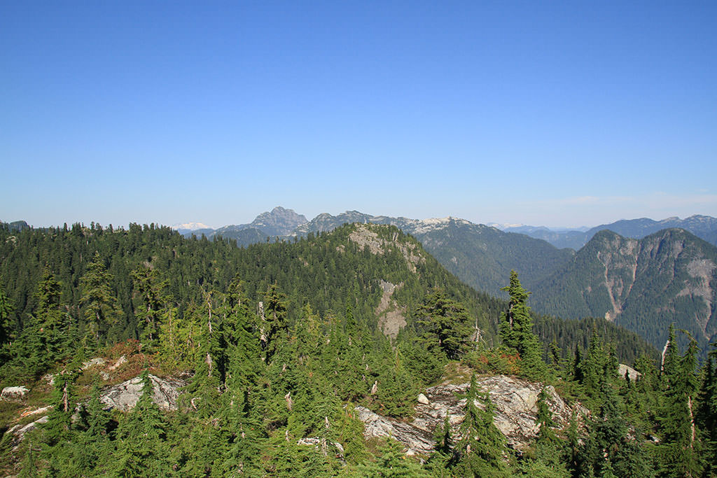 Thunderbird Ridge at Grouse Mountain, one of the best easy hikes near Vancouver