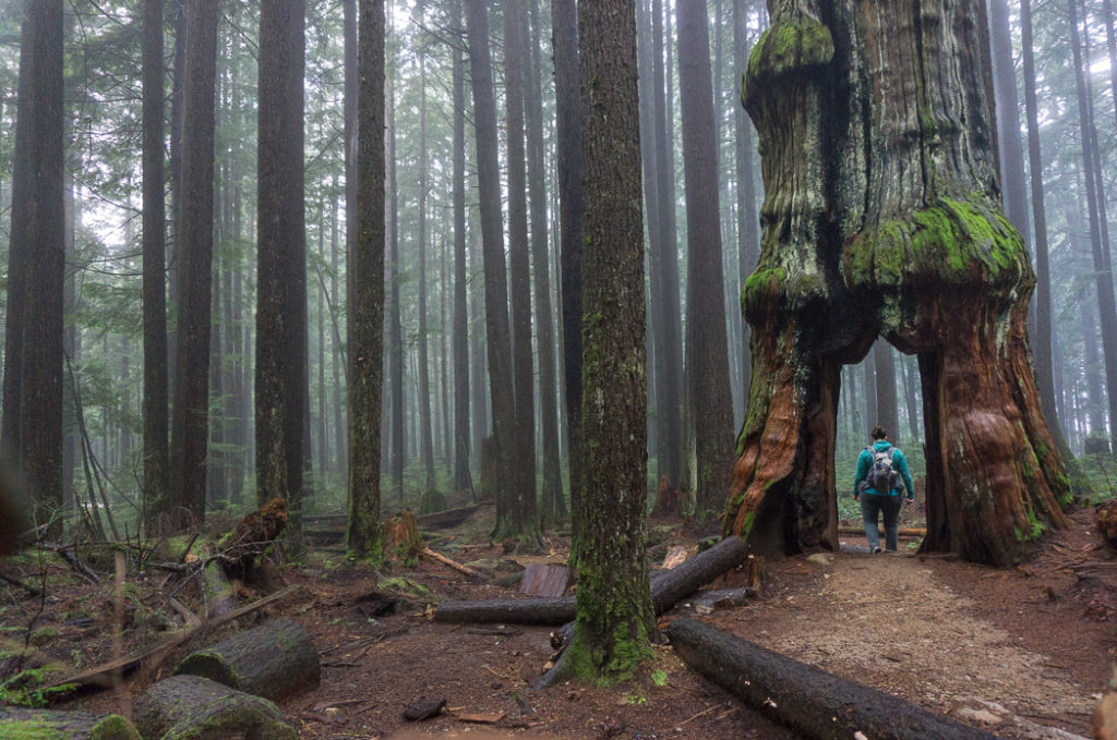 Hiking in North Vancouver, BC, Canada