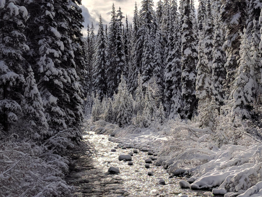 Snowshoeing past the Similkameen River on the Cambie Creek Loop in Manning Park. Read about how to snowshoe here in the Ultimate Guide to Snowshoeing in Manning Park near Vancouver, BC, Canada