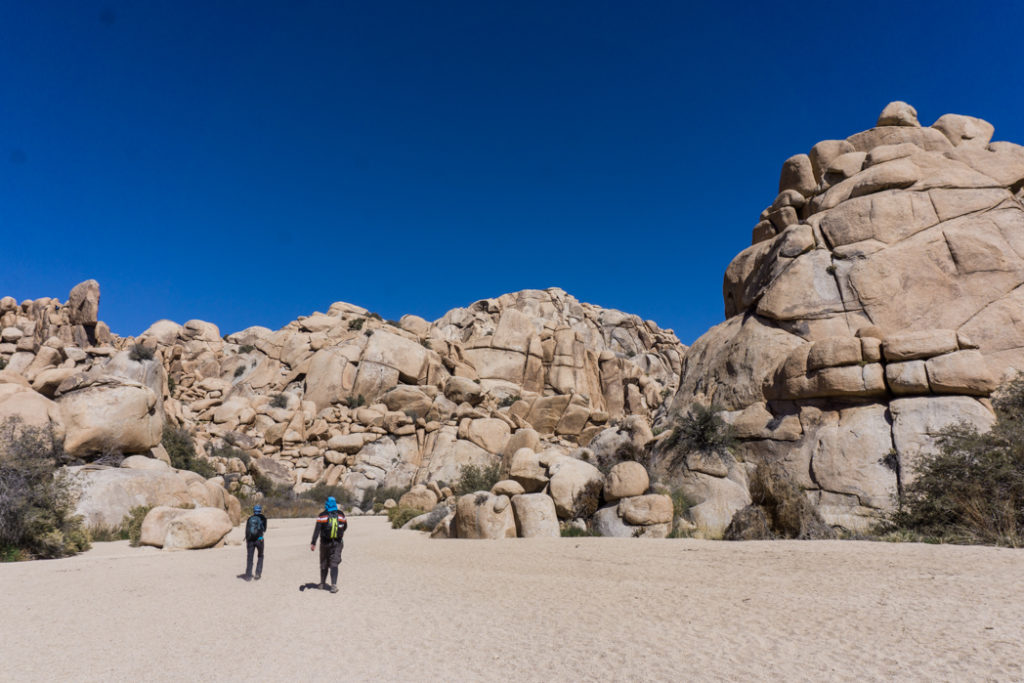 Hiking to the Willow Hole in Joshua Tree National Park one of 15 awesome things to do in Joshua Tree. Add hiking to your Joshua Tree bucketlist.
