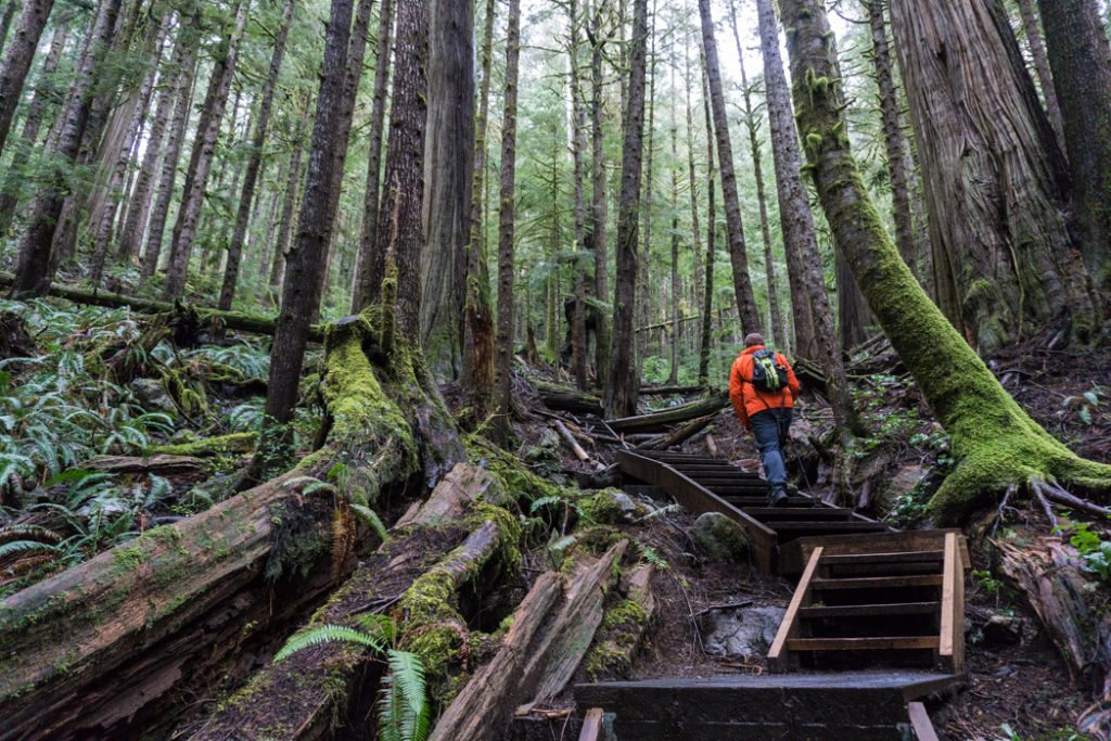Stairs and boardwalks in Upper Avatar Grove. Visit Big Lonely Doug, Avatar Grove and the other big trees near Port Renfrew, British Columbia.