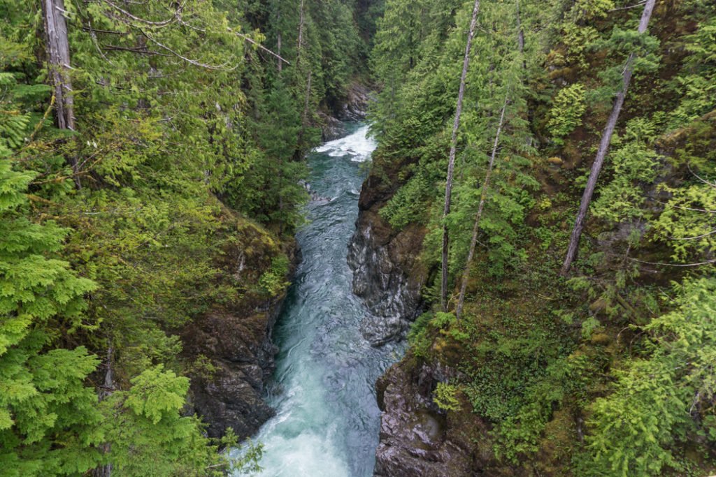 The deep canyon of the Gordon River near Big Lonely Doug. Visit Big Lonely Doug, Avatar Grove and the other big trees near Port Renfrew, British Columbia.