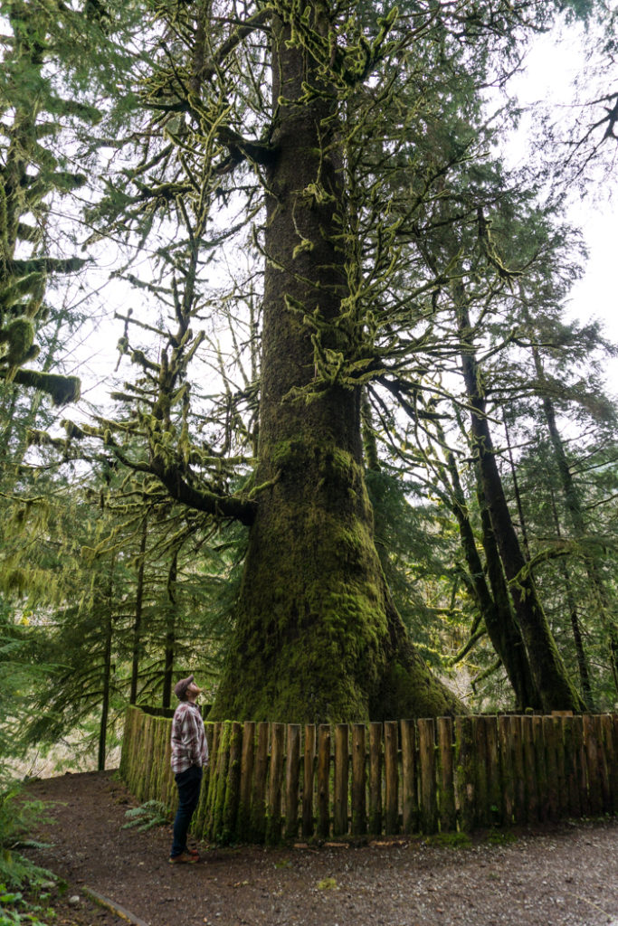 The Harris Creek Spruce. Visit Big Lonely Doug, Avatar Grove and the other big trees near Port Renfrew, British Columbia.