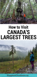 How to visit Canada's largest trees near Port Renfrew, British Columbia on Vancouver Island. Visit Avatar Grove, Big Lonely Doug and more