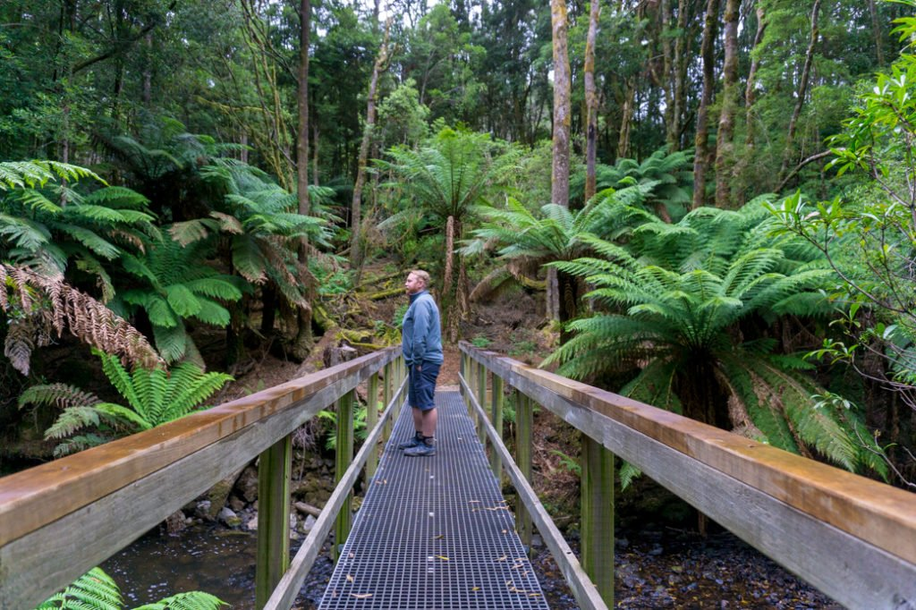 Walking in the rainforest on the Tarkine Drive in North West Tasmania. Just one of over 40 things to do in Devonport and Tasmania's North West.