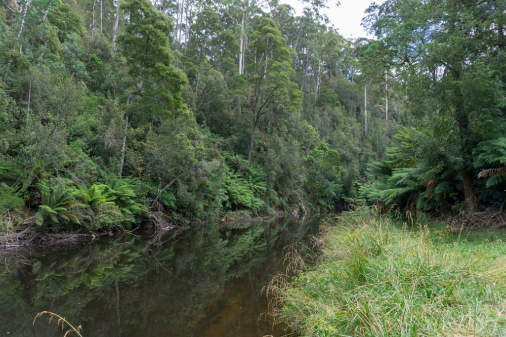Fern Glade track near Burnie, Tasmania. Just one of over 40 things to do in Devonport and Tasmania's North West.