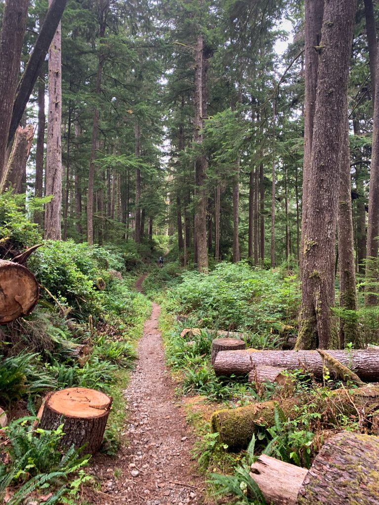 Flat and easy trail at the north end of the West Coast Trail