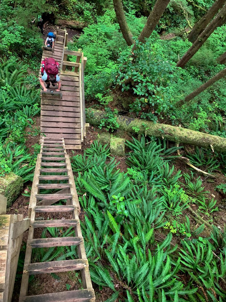 Hikers climbing a ladder at Walbran Creek. This is one of the most difficult West Coast Trail sections.