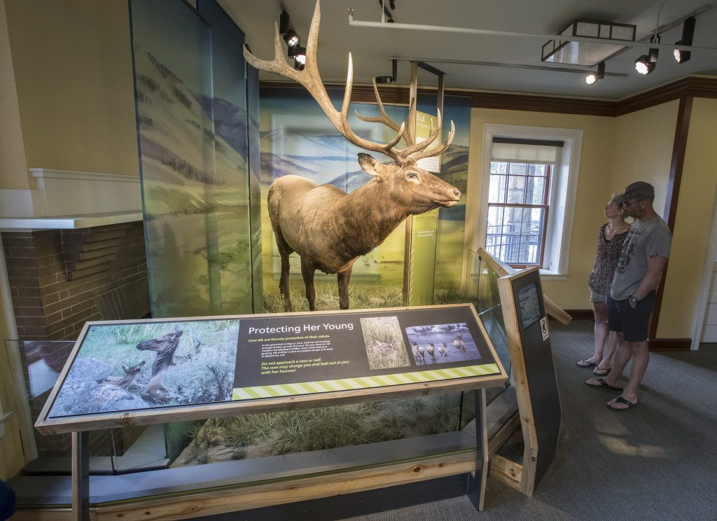 Elk in the Albright Visitor Center at Yellowstone