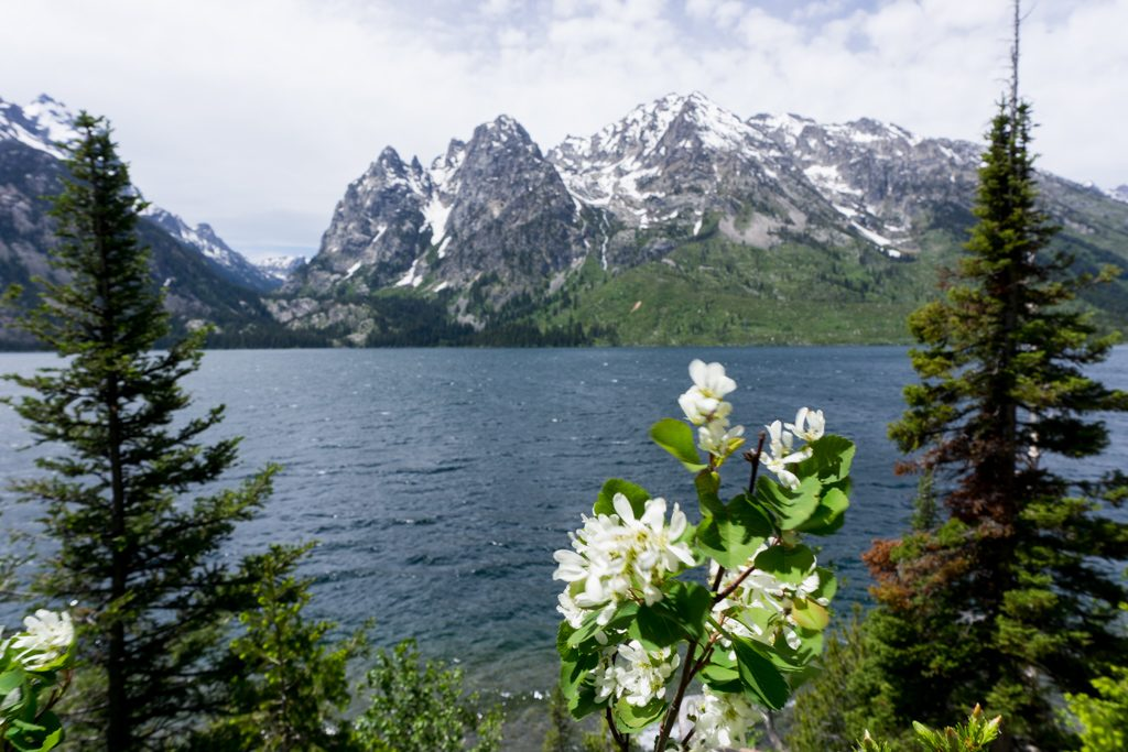 The view from the Jenny Lake Overlook in Grand Teton National Park