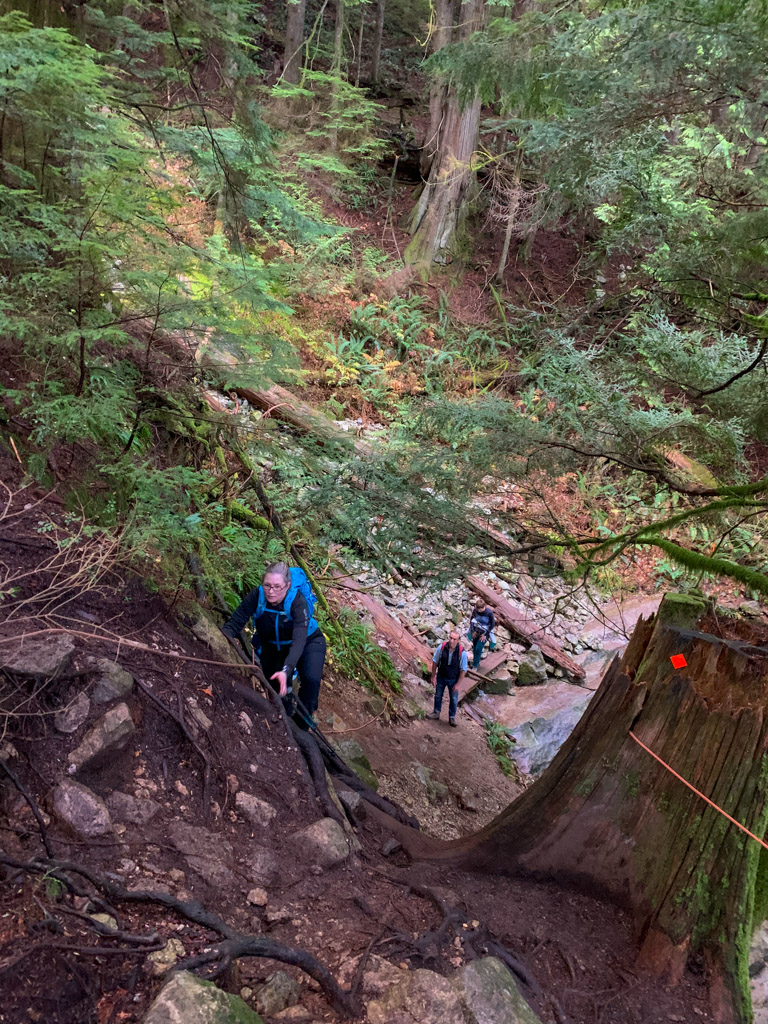 A hiker climbs up out of a gully on the Big Cedar Trail near Vancouver, BC