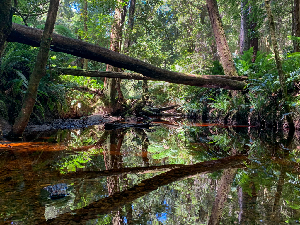 Rainforest near Hogarth Falls
