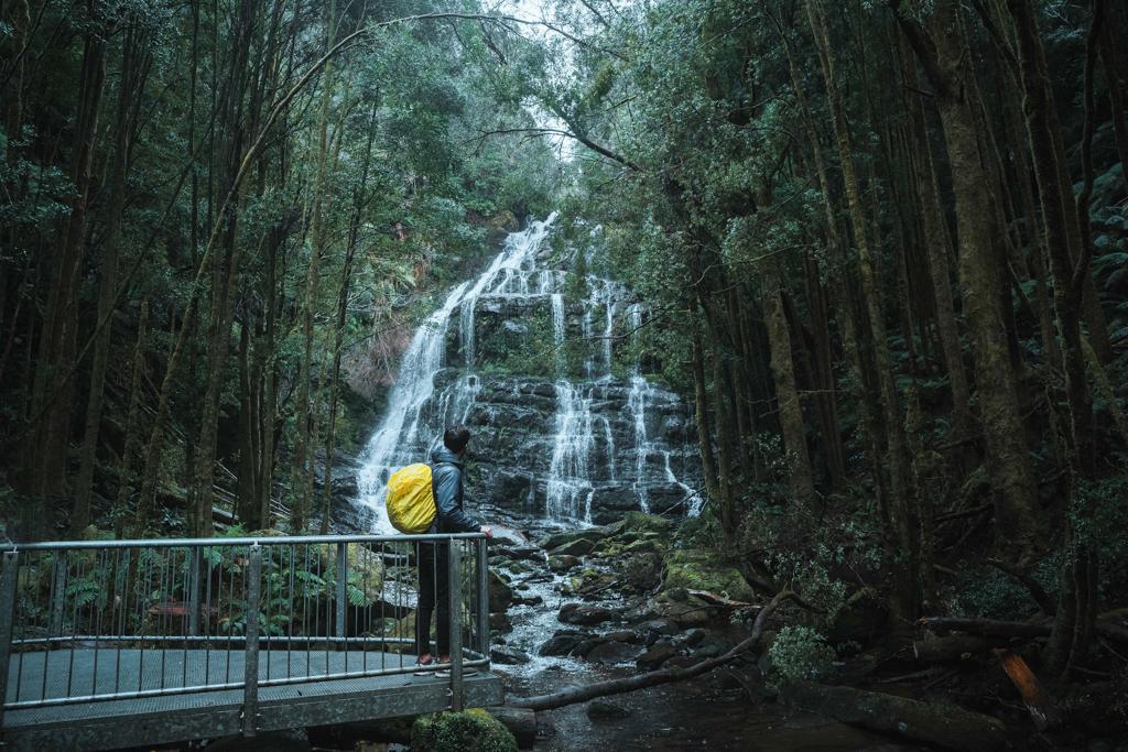Nelson Falls near Queenstown, Tasmania