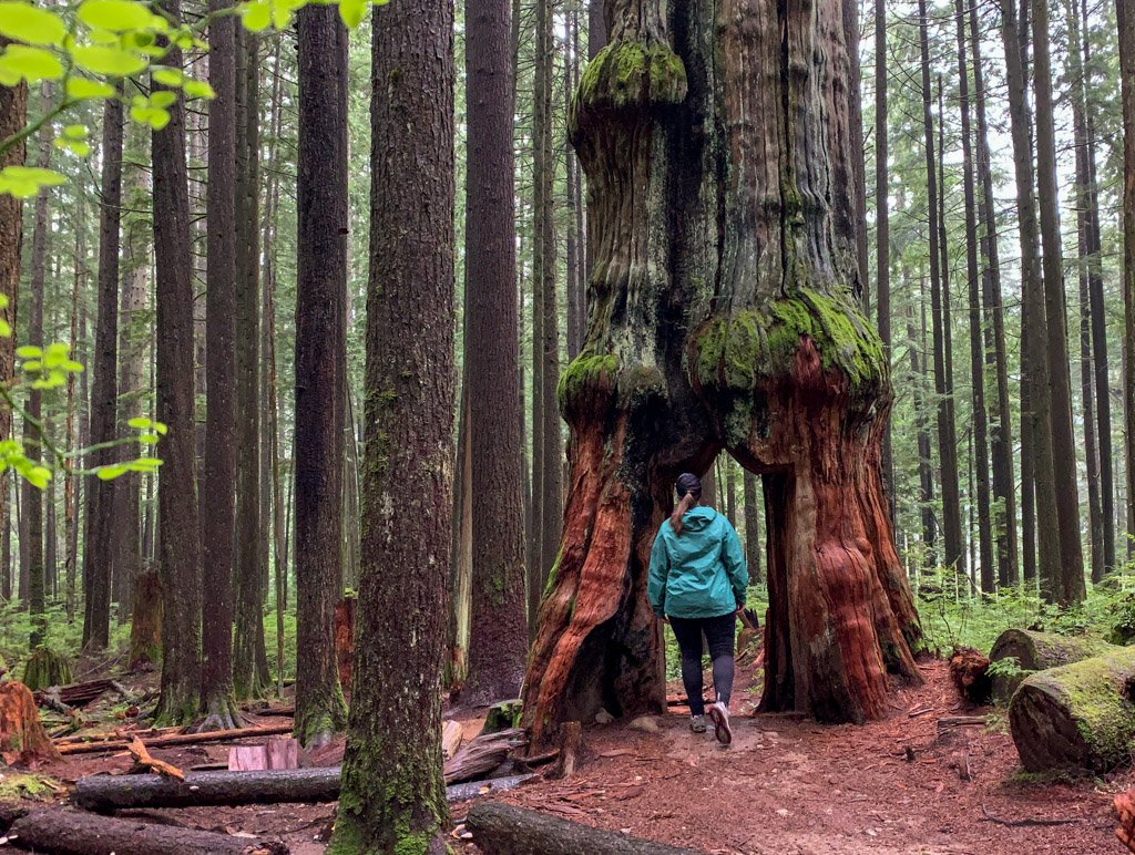 A plus size woman wearing a rain jacket walks through a hole in a giant tree. She's wearing a jacket from MEC, one of the best places to find women's plus size hiking clothes