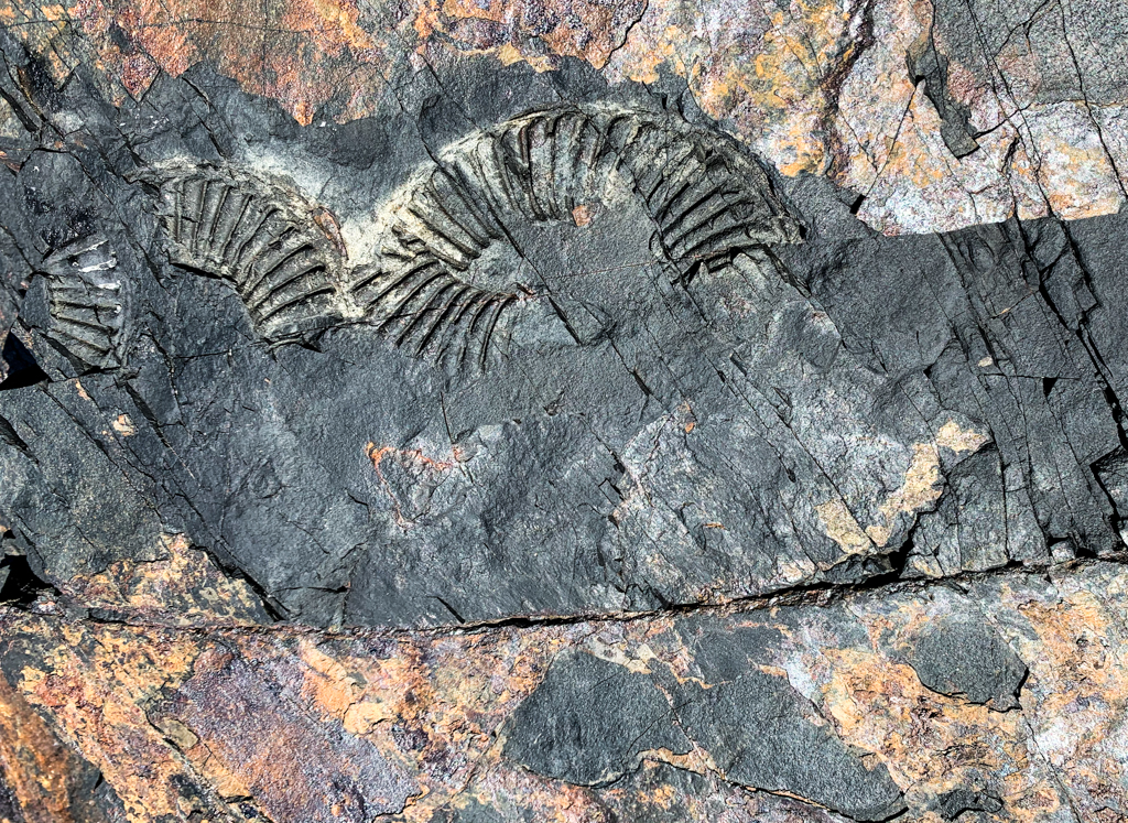 Fossils in the Johnstone Strait