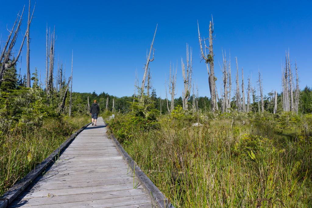 A hiker walks on a boardwalk in the Alert Bay Ecological Park on north Vancouver Island