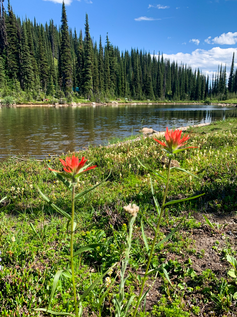 Wildflowers next to Balsam Lake at Mount Revelstoke National Park