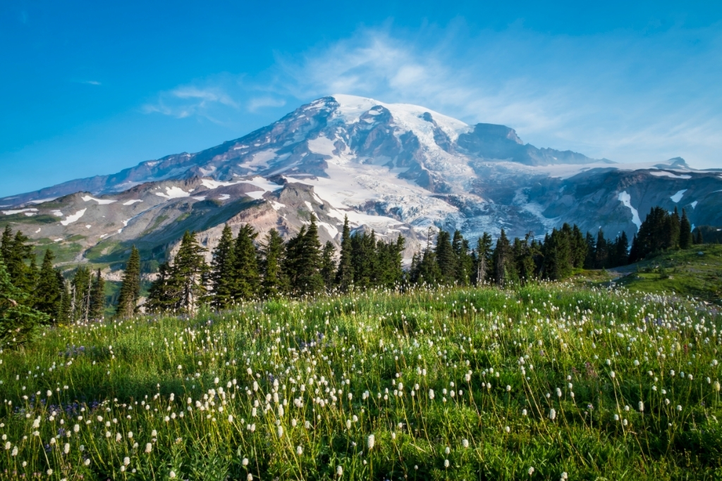 Mount Rainer behind a field of wildflower. Find out how to hike here with a list of Washington backpacking reservation dates
