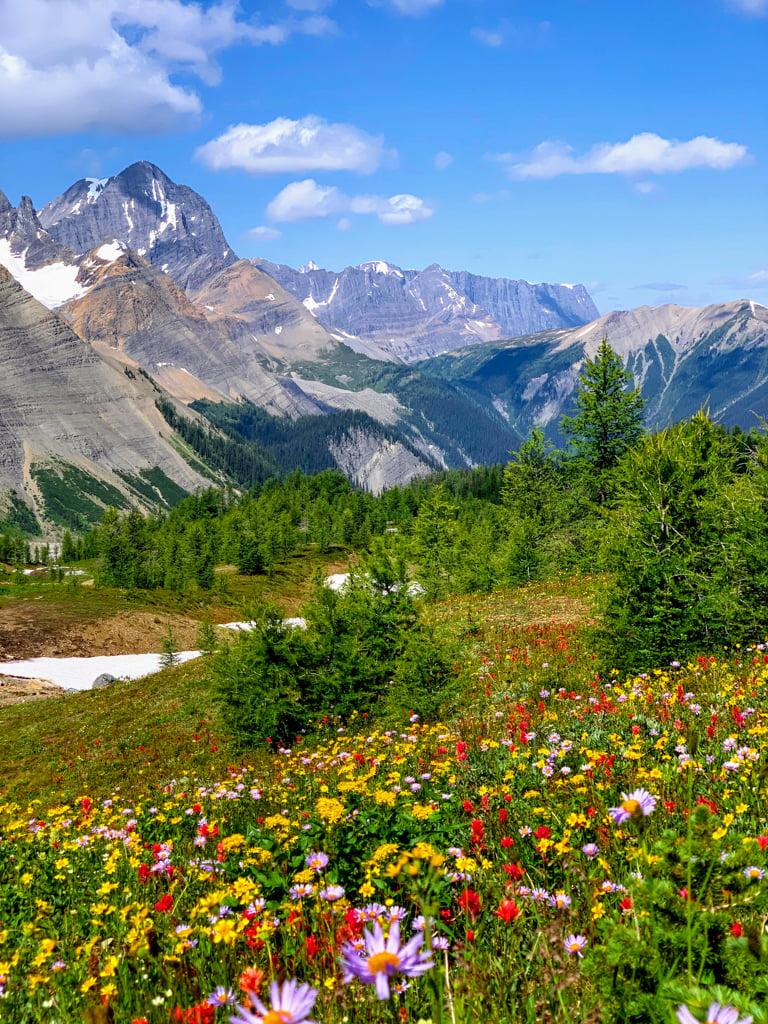 Wildflowers at Numa Pass