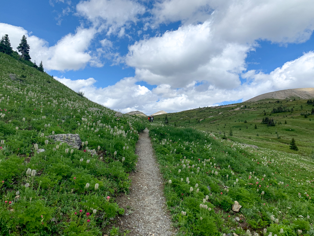 Wildflowers at Wolverine Pass on the Rockwall Trail