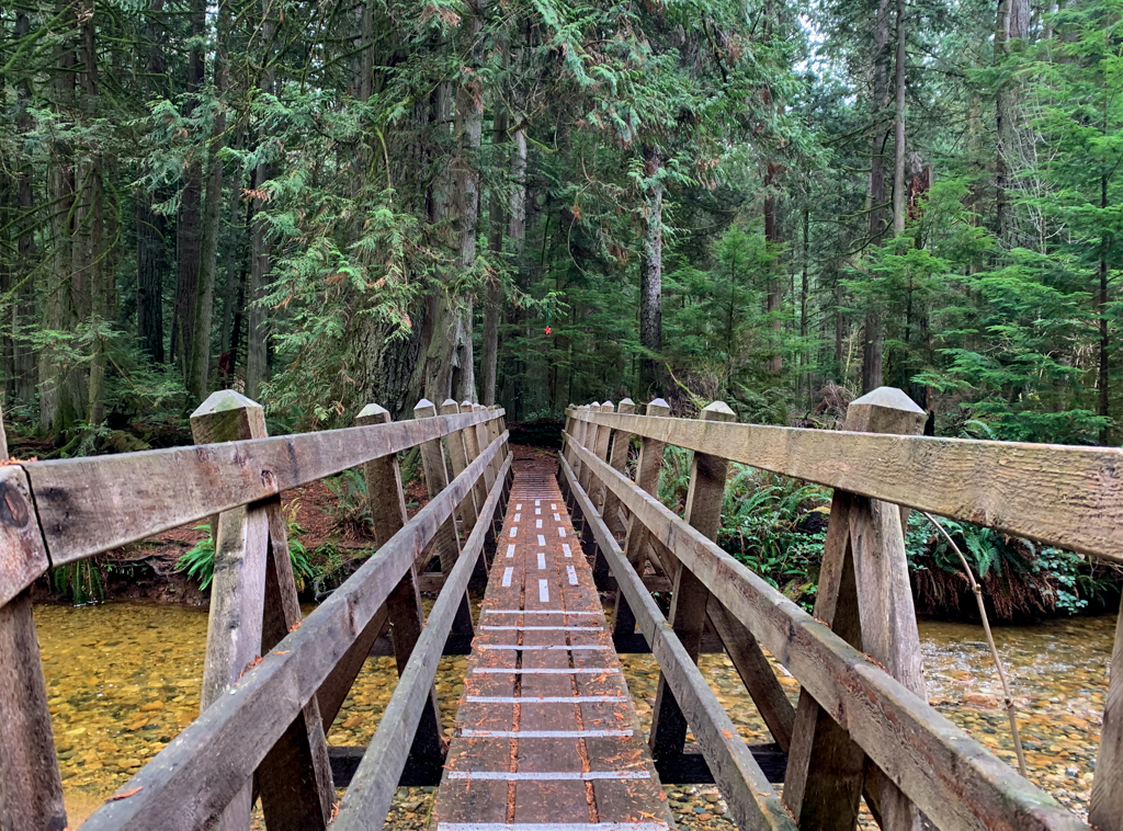 Looking across a wooden bridge into a cedar forest near Roberts Creek, BC