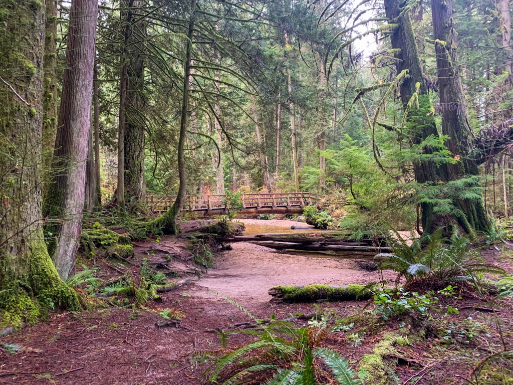 A bridge across a creek in the forest on the Sunshine Coast