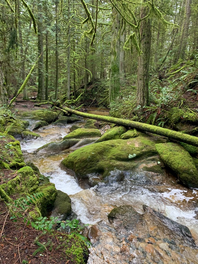 Moss covered rocks along the banks of Clack Creek in Roberts Creek, BC