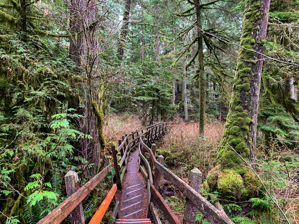 Curved walkway with railings in a mossy forest on the Sunshine Coast, BC