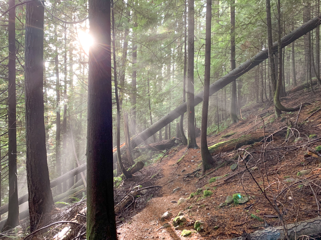 Sunbeams break through the trees, illuminating the narrow Langdale Falls trail through the forest.