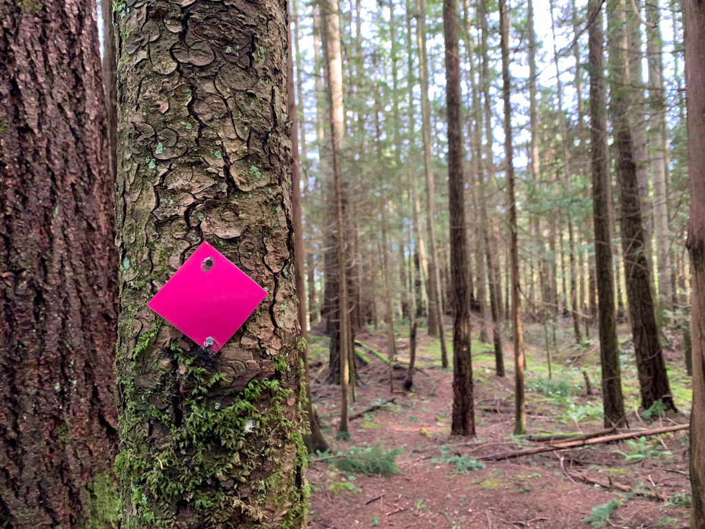 A pink trail marker shows the way to Langdale Falls in Gibsons, BC.