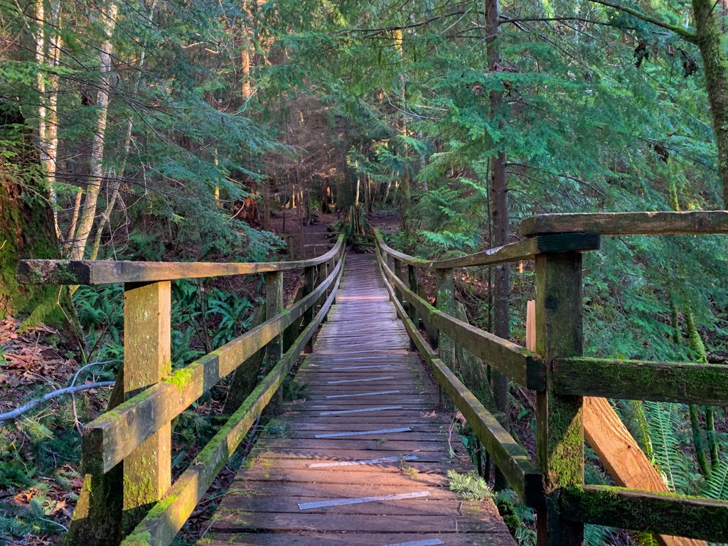 Wooden bridge through the forest near Gibsons, BC