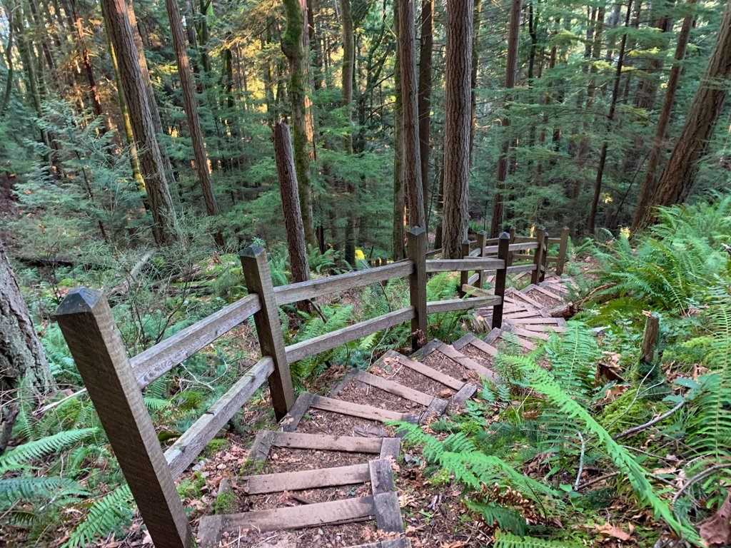 Stairs in the forest on the Soames Hill Trail near Gibsons, BC