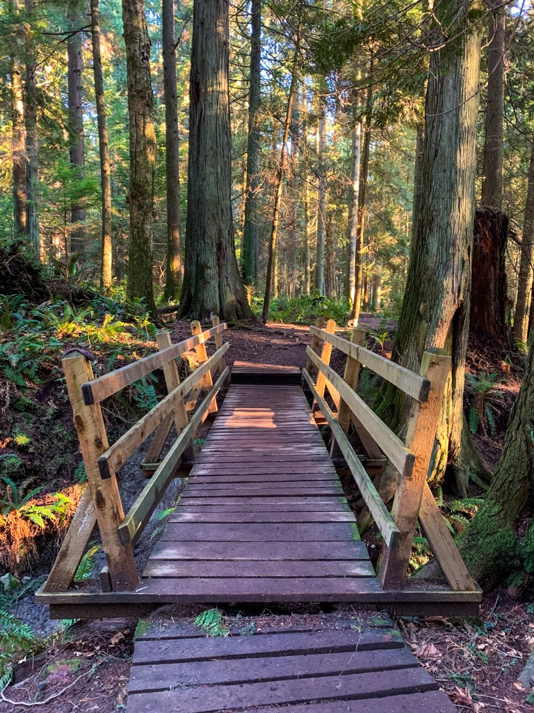 Wooden bridge in Soames Hill Park