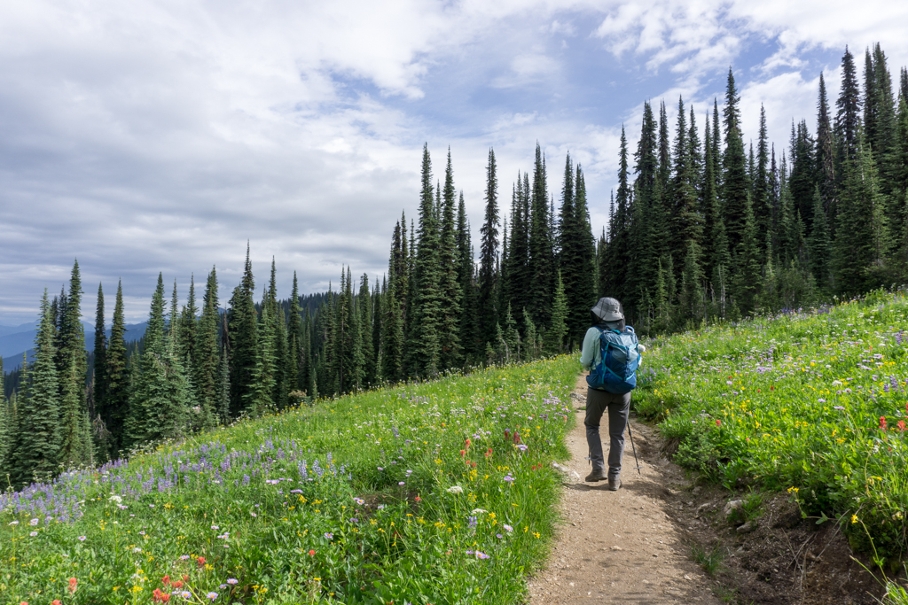 Wildflowers along the trail to Eva Lake in Mount Revelstoke National Park