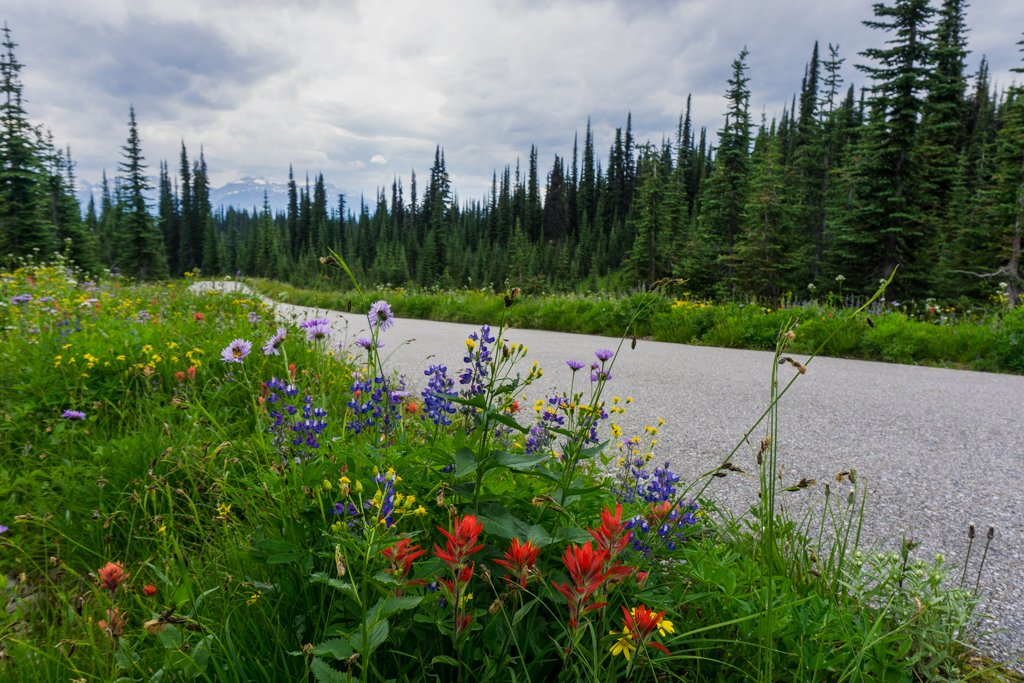 Wildflowers on the Meadows in the Sky Parkway in Mount Revelstoke National Park
