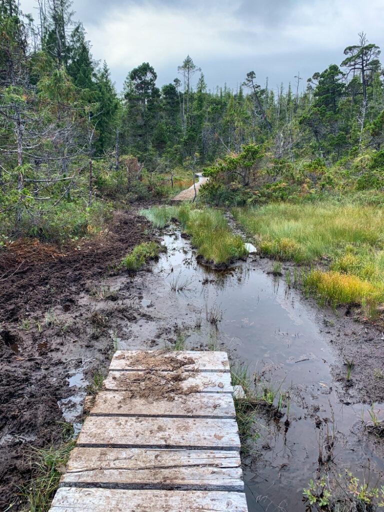 Mud on the North Coast Trail